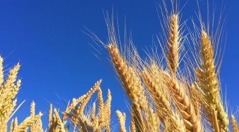 Cerealia - La festa dei Cereali